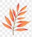 手绘秋叶图片
