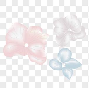 粉红色蓝色紫色兰花小清新浪漫唯美花卉图片