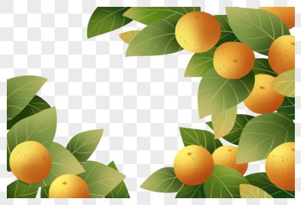 橘子边框图片