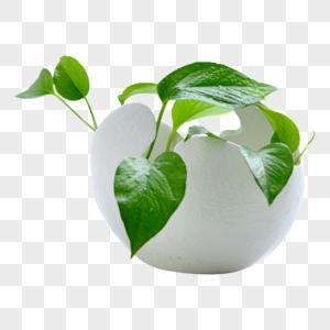 家居装饰绿植盆栽图片