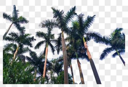 夏日椰子树叶沙滩海滩图片