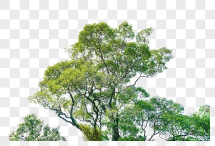 立面树绿色树木植物图片