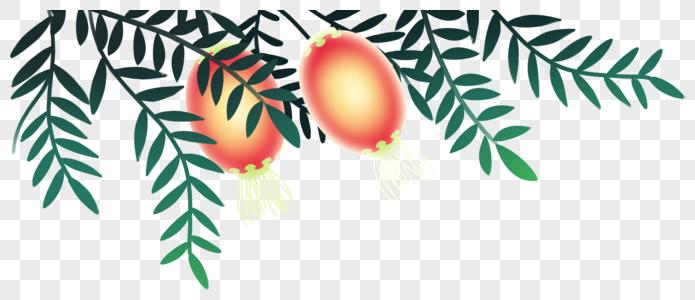 灯笼植物装饰图片