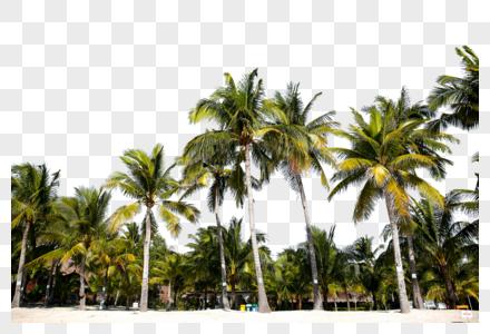 椰子树叶图片