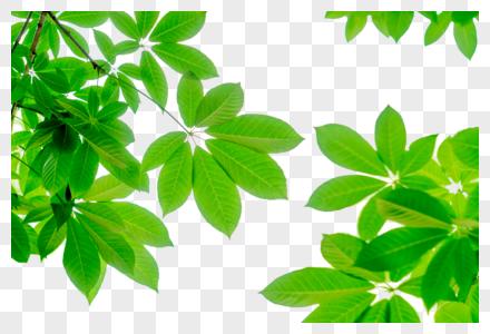 绿色树叶边角装饰图片