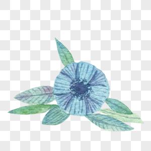 蓝色花朵叶子组合图片