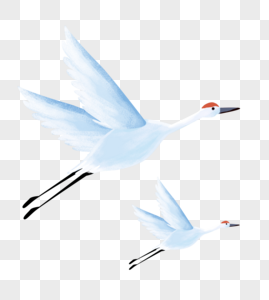白鹭手绘图片