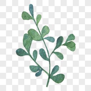 深绿椭圆形叶子图片