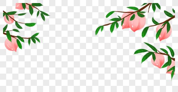 桃子树图片