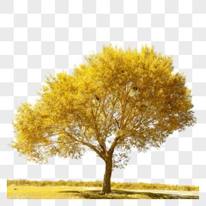 一颗绿色大树图片