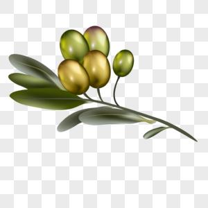 橄榄果图片