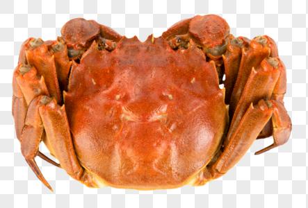 大闸蟹图片