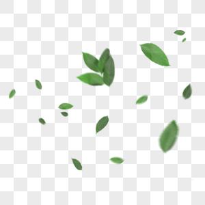 漂浮的绿叶图片