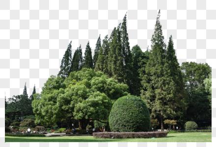 蓝天白云树林草地景观风景图片