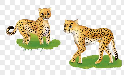 动物园豹子图片