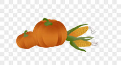南瓜玉米图片
