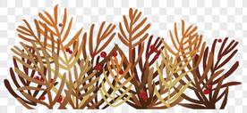 秋天植物装饰图片