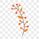 红色果实枝图片