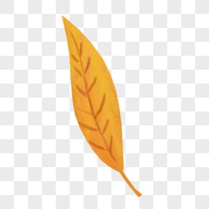 金黄色树叶图片