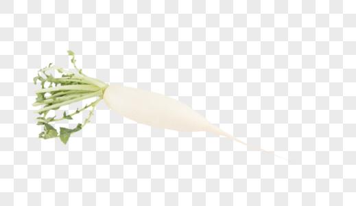 白萝卜蔬菜图片