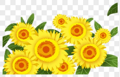 向日葵花海图片