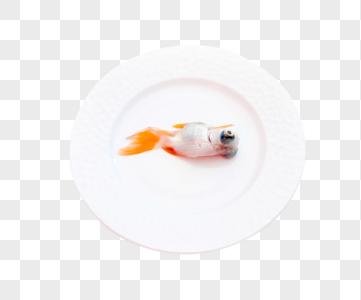 金鱼保护动物概念表达图片