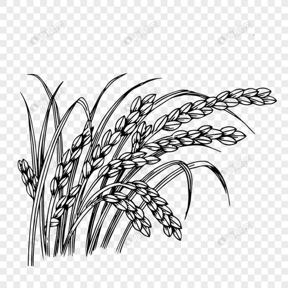黑色线条麦穗装饰图案元素素材ai格式_设计素材免费