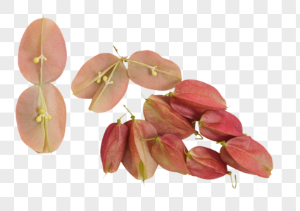 清新红果种子树叶创意摆拍图片