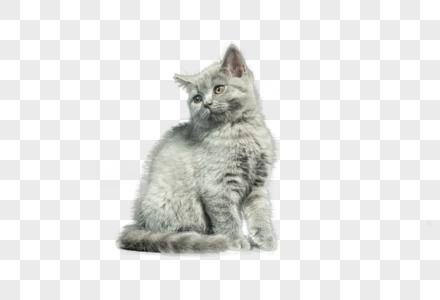 黑背景下的猫图片