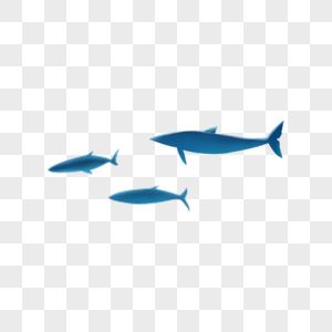 鲨鱼鳍图片