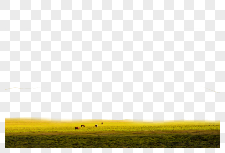 金黄草原图片