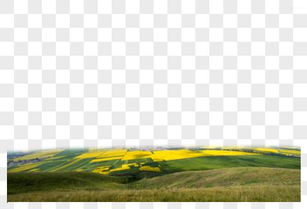 阳光下的田野图片