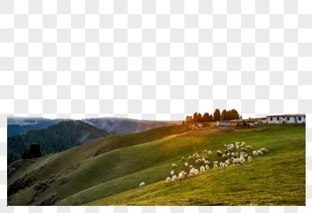 山丘羊群图片