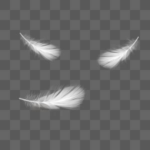 白色羽毛图片