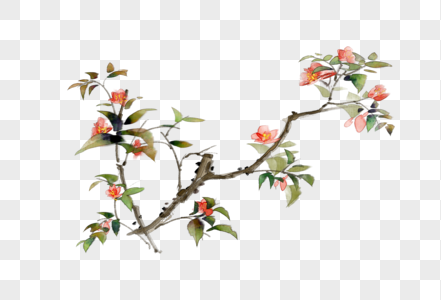 水墨水彩花卉图片