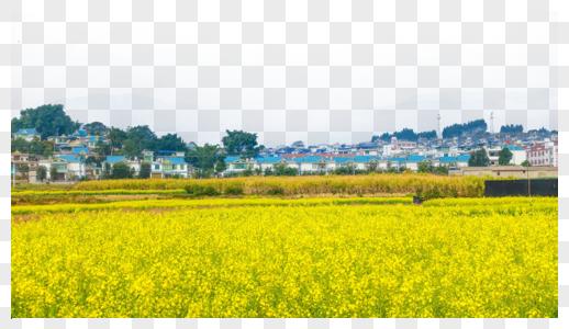 云南大理乡村油菜花图片