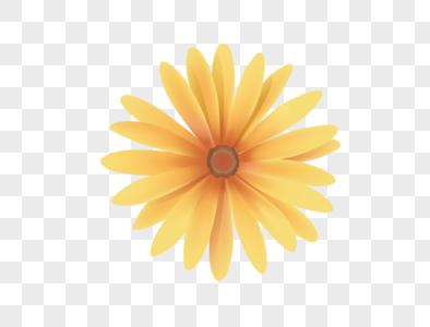 黄色菊花矢量图元素图片