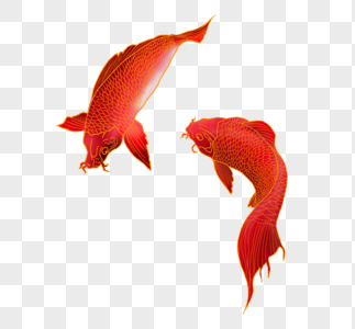夏天锦鲤图片