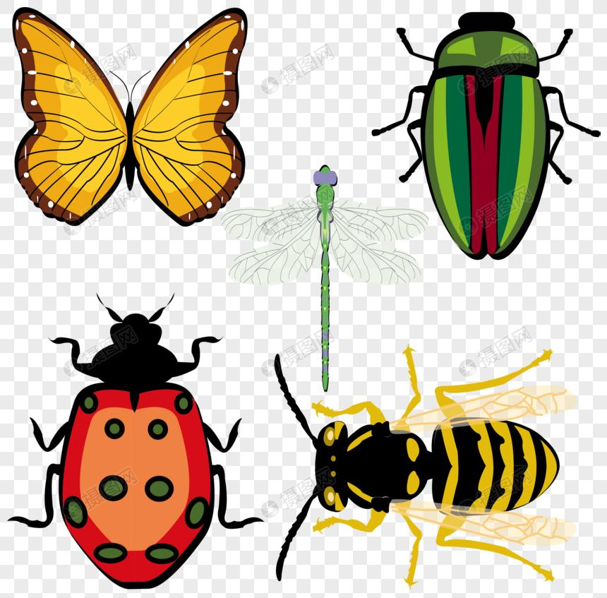 昆虫 素材