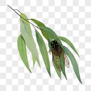 柳树和蝉元素图片