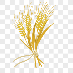 金黄色的麦穗图片
