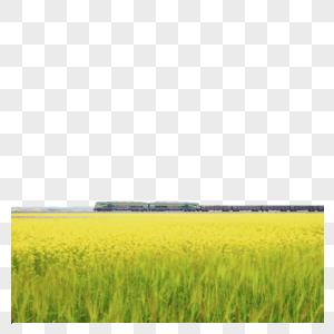 青海油菜花青稞田间的和谐号列车图片