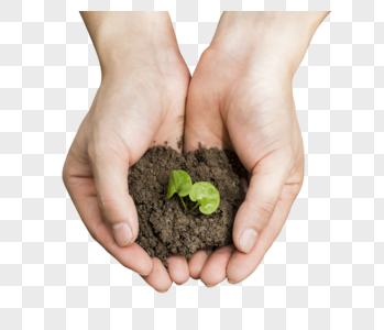 双手捧起泥土里的嫩芽图片
