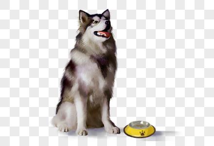 哈士奇狗狗狗盆宠物可爱萌宠元素图片