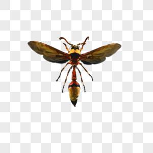 蜜蜂标本图片