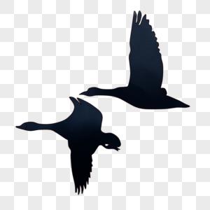 飞翔的鸟儿图片