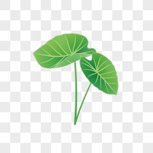 绿叶夏季植物芋头叶子图片