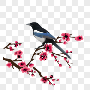 小鸟和梅花图片