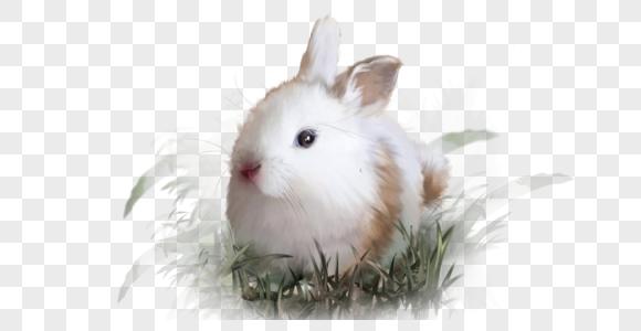 兔子白兔宠物动物可爱草地手绘元素图片