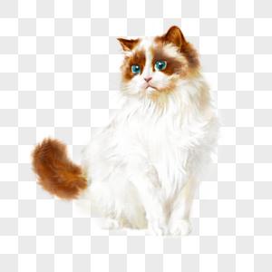 白色布偶猫猫咪宠物手绘可爱元素图片